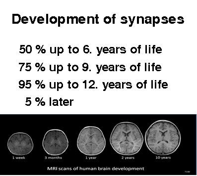 Development of synapses